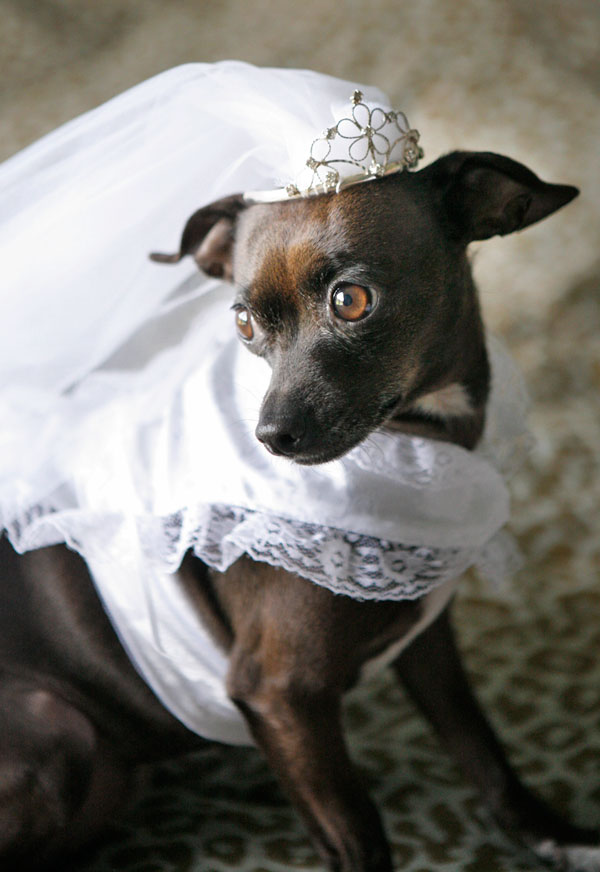 Asheville_Weddings_3